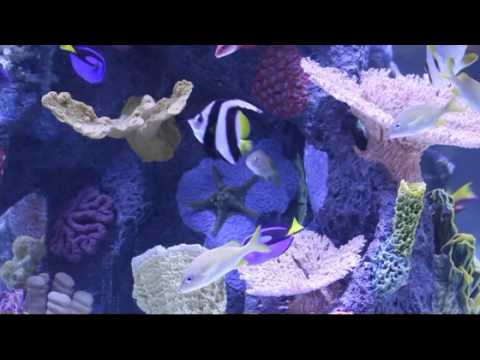 Fish tank at wind creek casino hotel youtube for H and m fish count