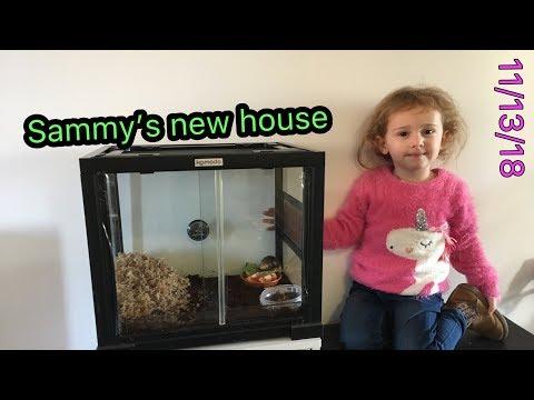 Sammy Snails new house 🐌 #dailyvlog #stevesfamilyvlogs