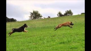 Hundehütte Hundepension Lichtenau, Zwischen Baden Airpark Und Europapark