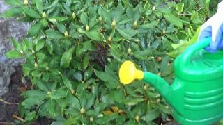 Jak wspomóc rośliny w walce z chorobami grzybowymi