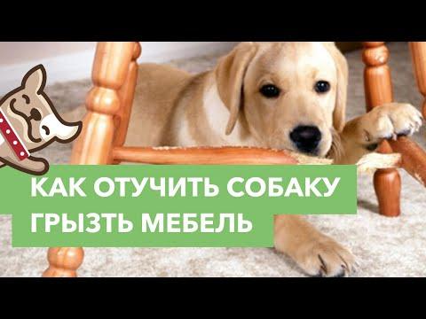Как отучить собаку грызть мебель советы по воспитанию