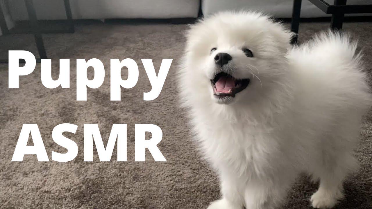 Puppy ASMR: Casper's New Snuffle Mat