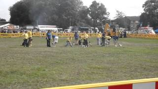 Pads Dog Training - Mod Stafford Flyball And Obedience Display
