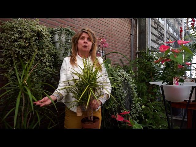 Kamerplanten verzorgen | ook in het voorjaar