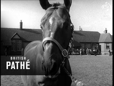 Stallion Show (1956)