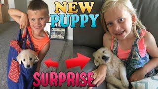 Luau Party, Puppy Gets a Name || Mommy Monday