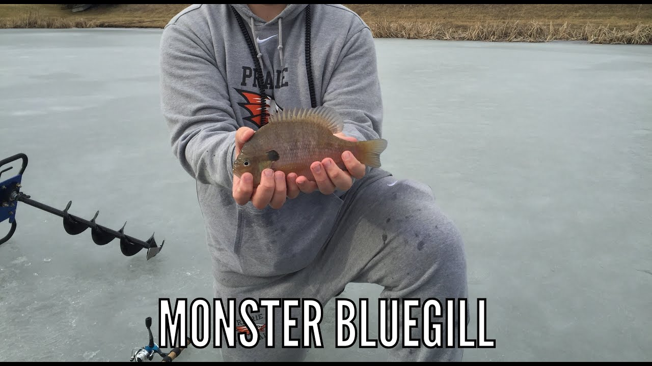 14 inch crappie nice bass and monster bluegill youtube for 13 fishing tickle stick