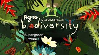Agricoltura e biodiversità - Che cosa si intende per agro-biodiversità? - Dott. Giovanni Bargnesi