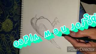 How to drawing bird
