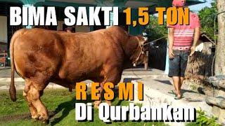 BIMA SAKTI SAPI TERBESAR INDONESIA 2021