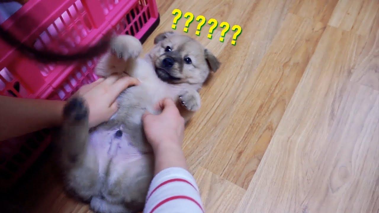 아기강아지랑 놀기? OR 강아지가 주인을 놀아주기?  | 빵디월드#9🐶