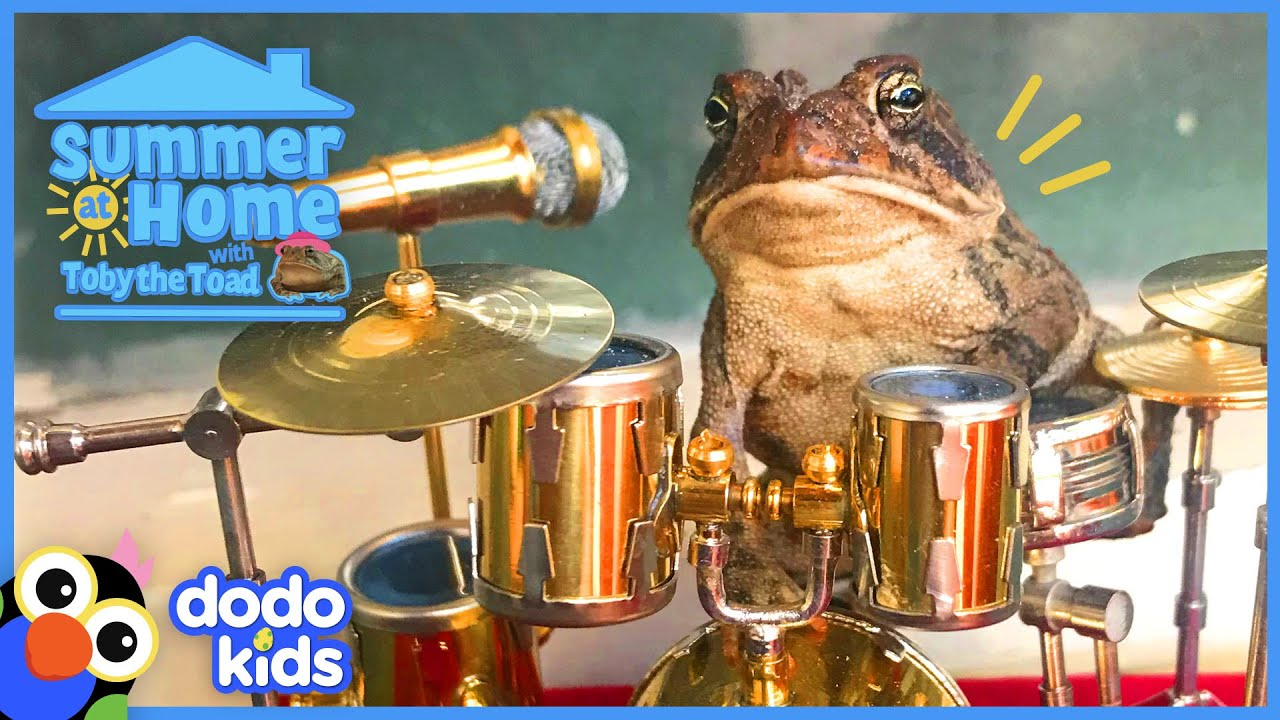 Toby The Toad Shows Us How To Summer At Home   Dodo Kids   Animal Videos For Kids