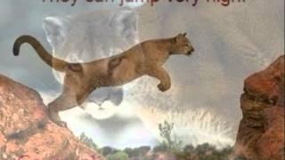 Lyla: Cougar Thumbnail