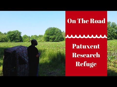 On The Road Ep.1: Patuxent Research Refuge