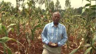 Drought Tolerant Maize for Africa (DTMA)