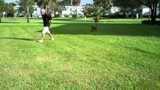 Puppy Long Line Training - Kent & Jed