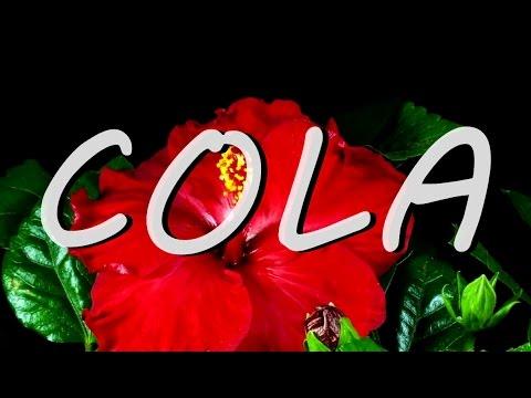 LANA DEL REY, COLA (with lyrics)