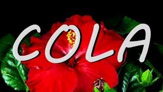 LANA DEL REY COLA With Lyrics