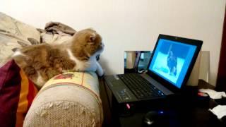 Кошка изучает звуки птиц