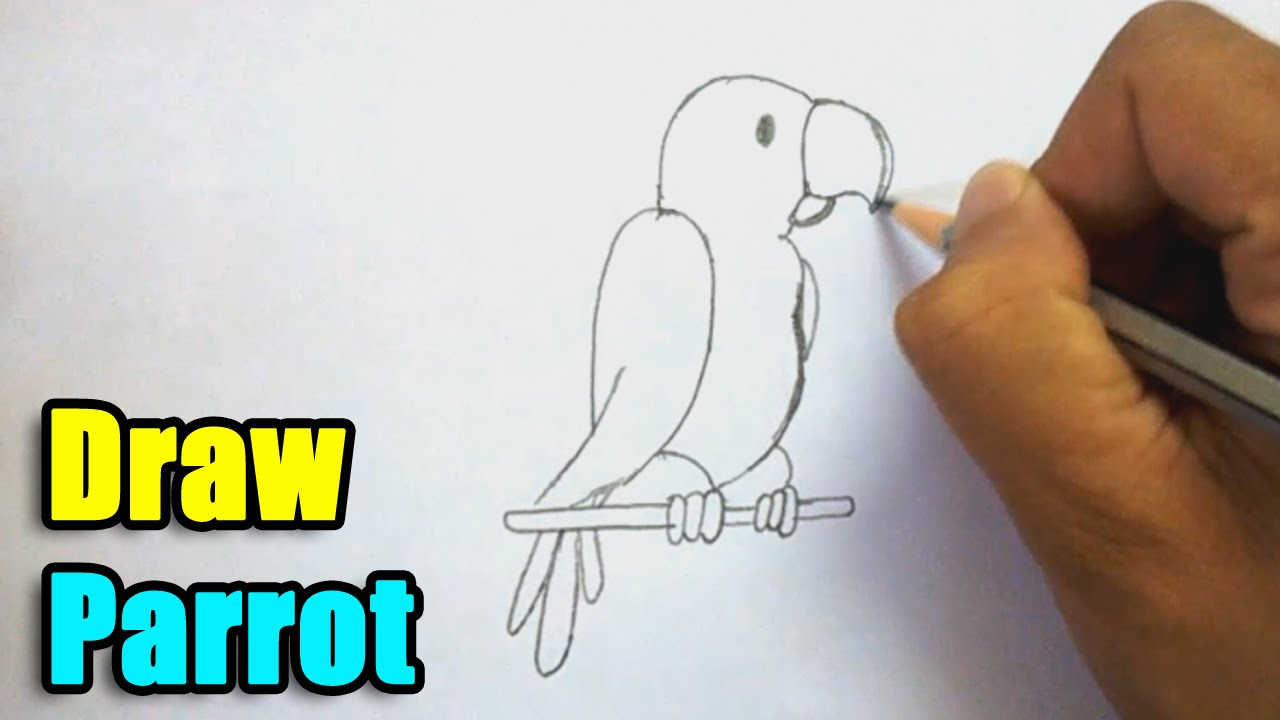 Uncategorized Easy Parrot Drawing how to draw parrot youtube