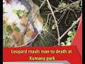 leopard mauls man to eng