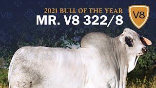 Mr. V8 322/8 Brahman Bull — 2021 V8 Ranch Bull of the Year