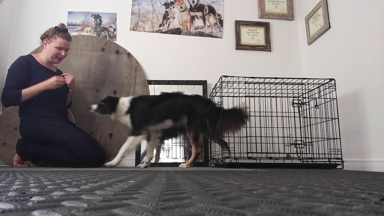 Chien Fait Ses Besoins La Nuit dressage de chiens: les 5 questions incontournables sur la cage