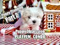 Part 2 PUPPY PLANNING How to get ready for a Maltese Puppy - BEST Puppy Potty Training Set-Up 말티즈