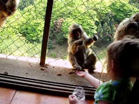 Avery feeding the monkeys at Iwatayama park
