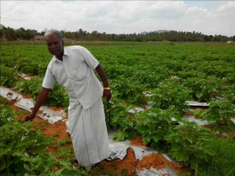 Organic pesticides preparation in simple way  by N. Madhu balan