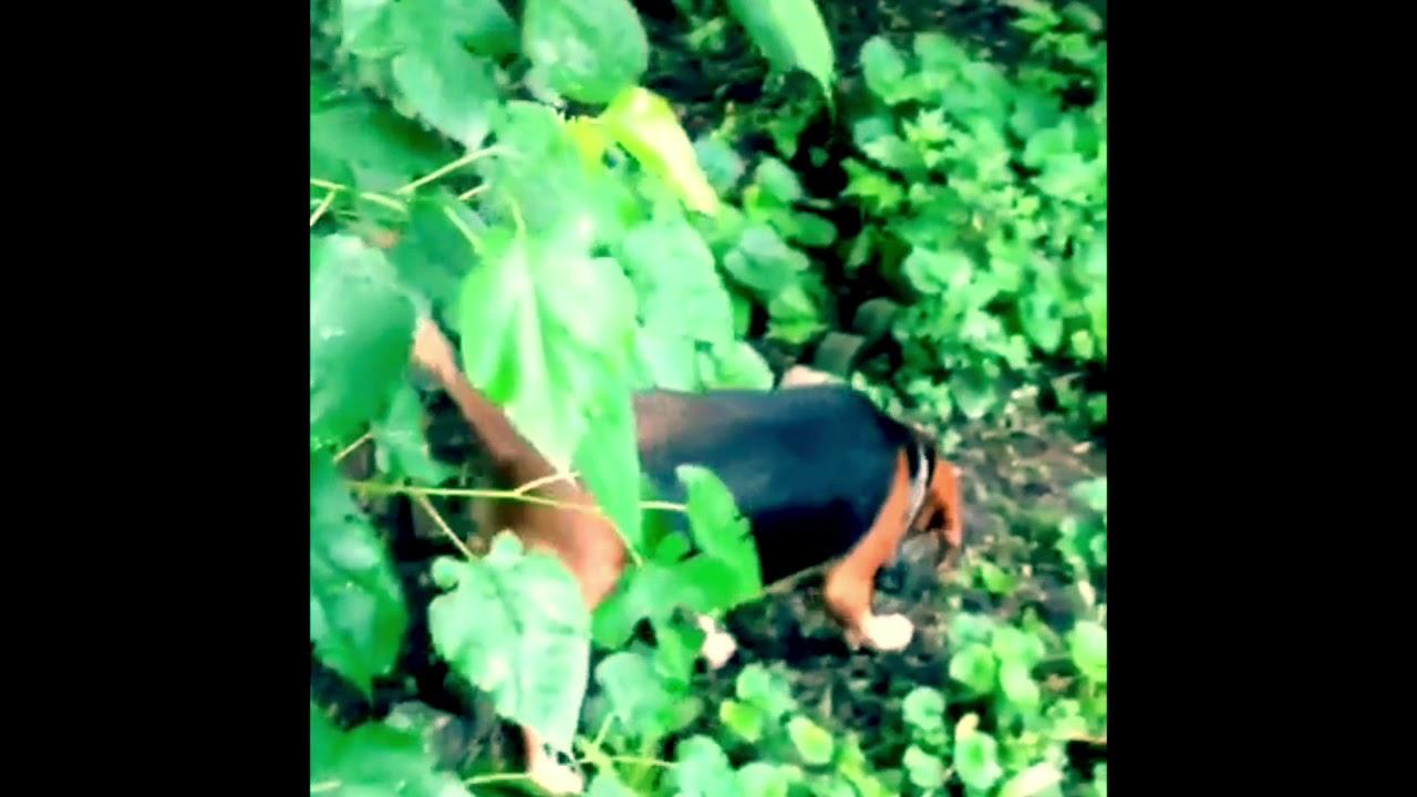 Mock Beagle Hunt -Visual Poetry