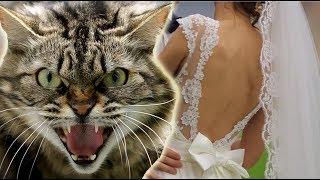 """""""Огромный кот"""" напал на невесту . Дима и Альбина свадебный клип"""