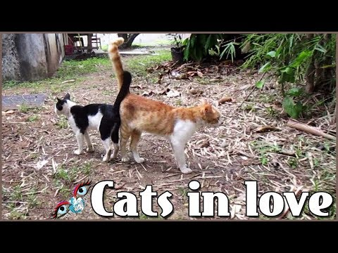 dating i love cats