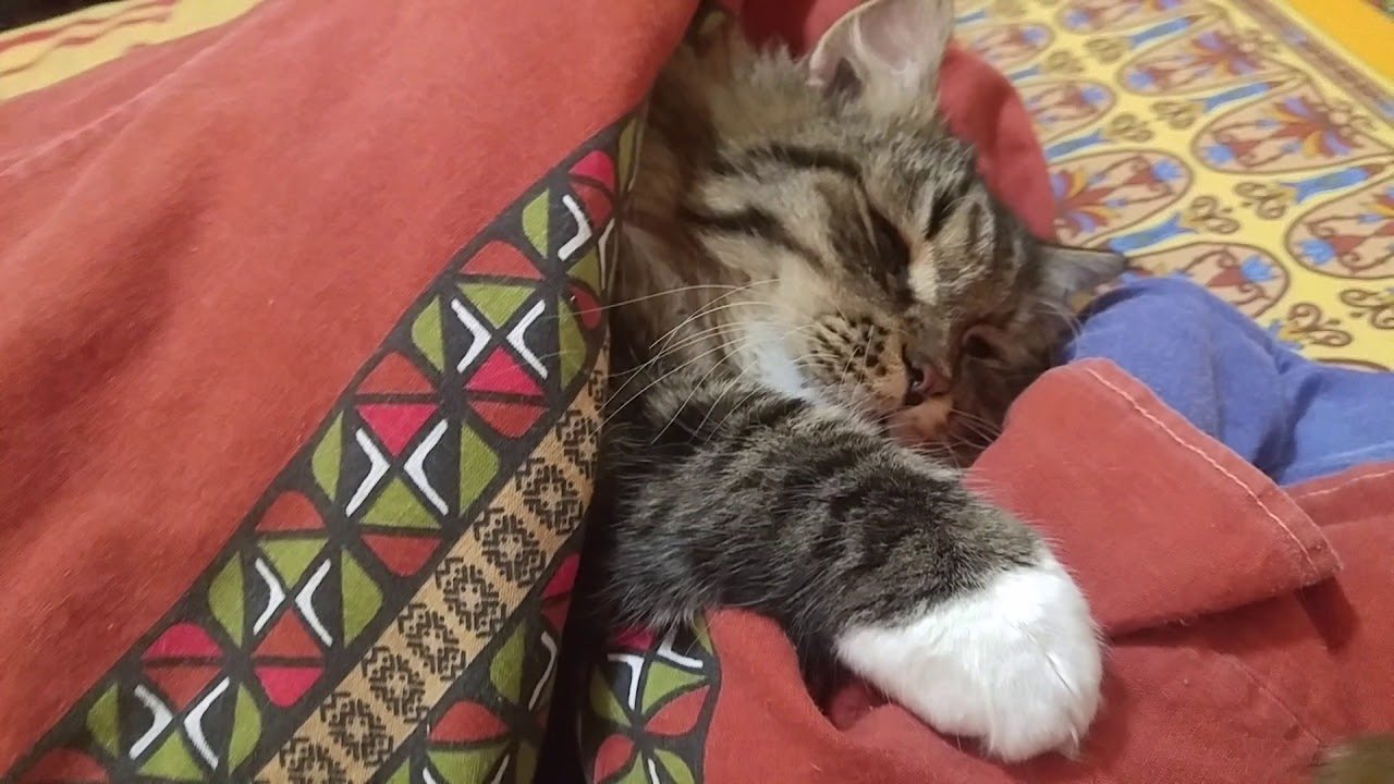 кот спит картинки