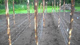 Seeds Are Planted Waiting For Rain #04 Heirloom Organic Vegetable Garden