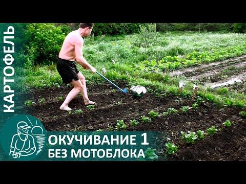 🌿 1-е окучивание картофеля с подкормкой навозом и золой по методу Гордеевых