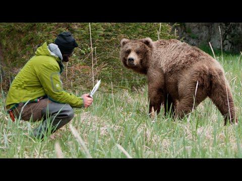 Эта медведица пришла за помощью к людям, рискуя жизнью ради спасения своего малыша