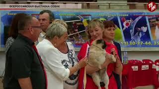 Время местное Эфир: 27-06-2018 - Всероссийская выставка собак