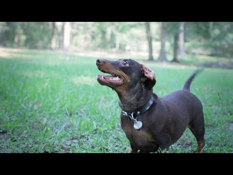 Iso In Slow Motion - Dog Park (music by Joy Valencia)