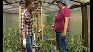 Пасынкование помидоров -  уДачные советы(Телеканал