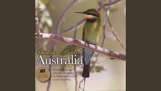 Morning Chorus: Pale-Headed Rosella, Laughing Kookaburra, Dollarbird, Rainbow Lorikeets, Pied...