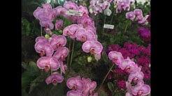 Jacksonville Florida Orchid Show
