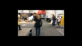 Walking A Service Dog In Training Through The Indianapolis Home Show