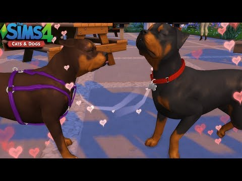 THE SIMS 4   CATS & DOGS - EPISODE 7   WE HAVING PUPPIES?!