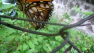毛虫が蛹になり、蝶と化す。