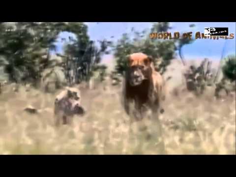 Thực hành: Xem phim về tập tính săn mồi của động vật