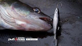 Календарь рыболова с 6 по 13 ноября 2017 года от телеканала 'Трофей'