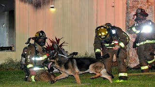 Family Dog Helps Firefighters Get Children out of a Burning House