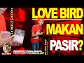 Red Farm  Lovebird Makan Pasir Isi Kandang Ternak Red Farm  Mp3 - Mp4 Download