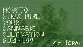 How to Structure Your Cannabis Cultivation Business
